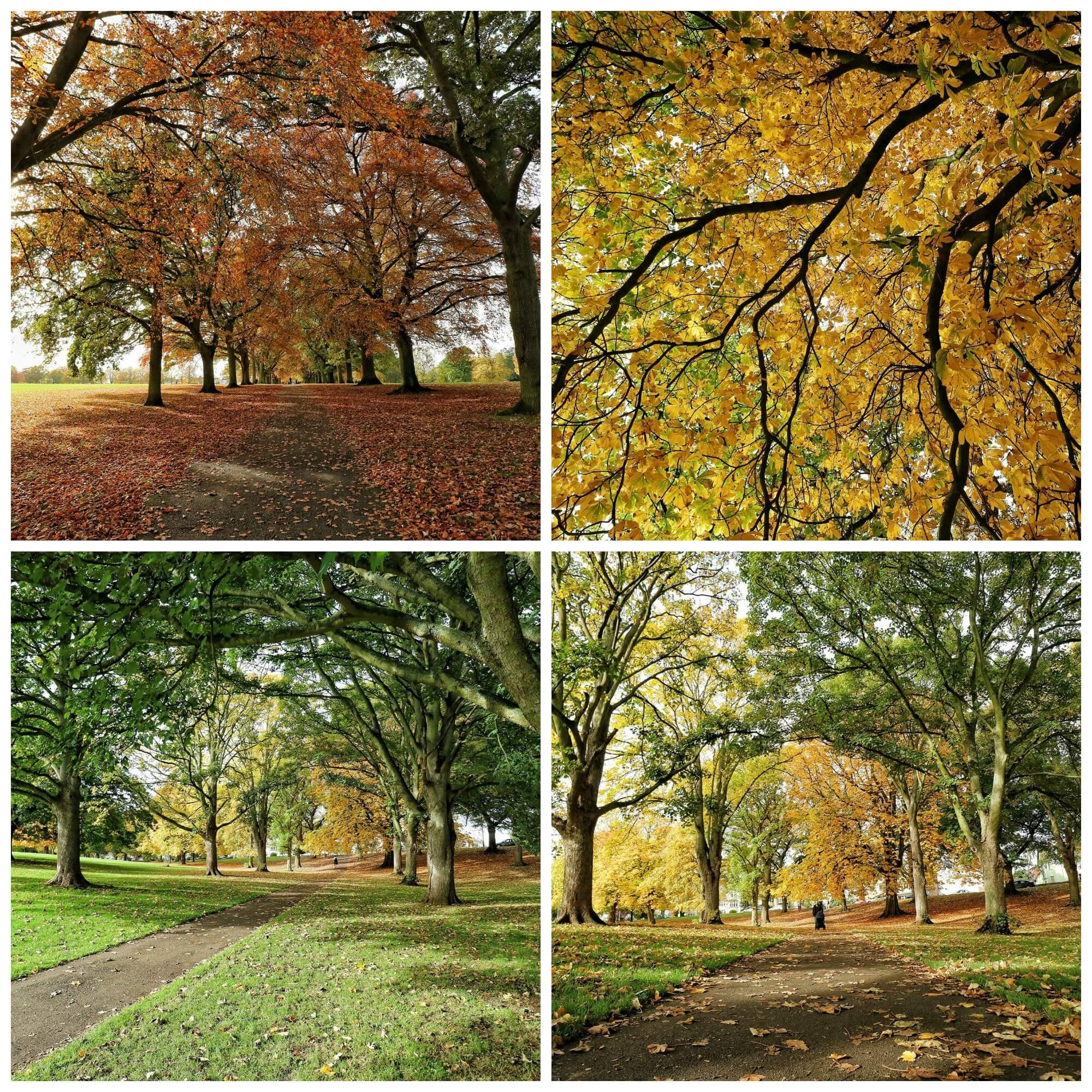 autumn2collage
