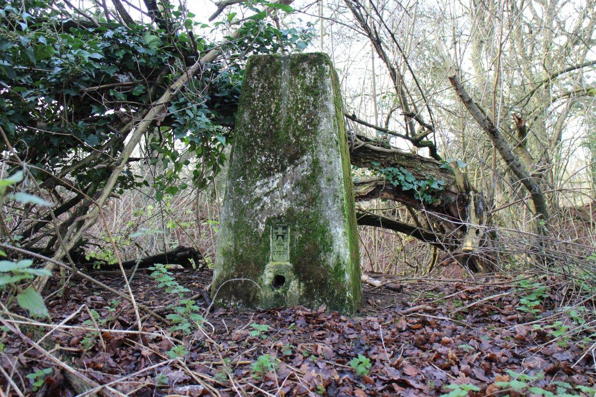 Unearthing Local Treasures