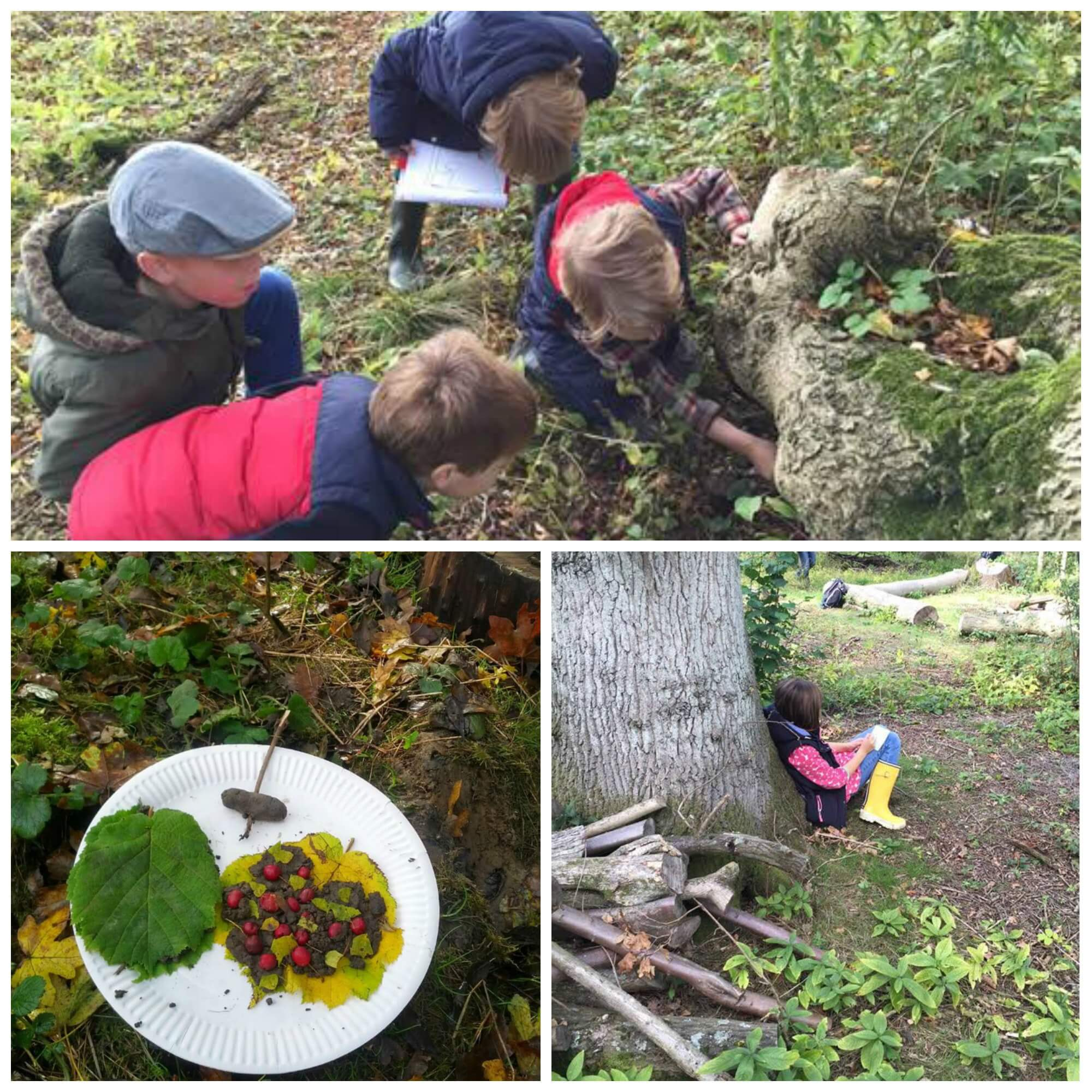 forestschoolcollage