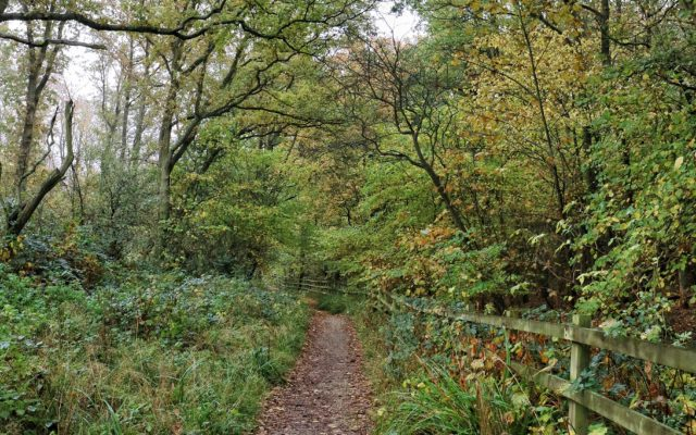 Fermyn Woods Country Park