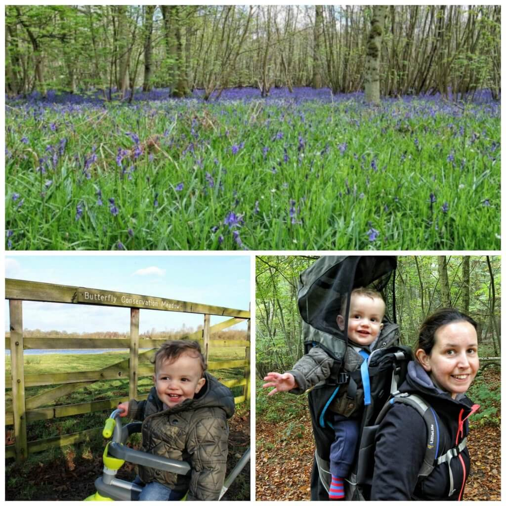 a collage showing a wood with bluebells, a little boy on a trike and a mum carrying a baby on her back while walking through a wood