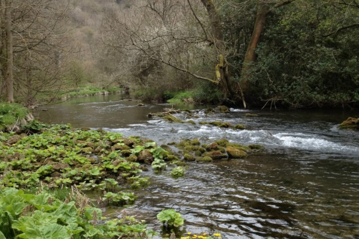Peak District: Easy Dovedale Walk