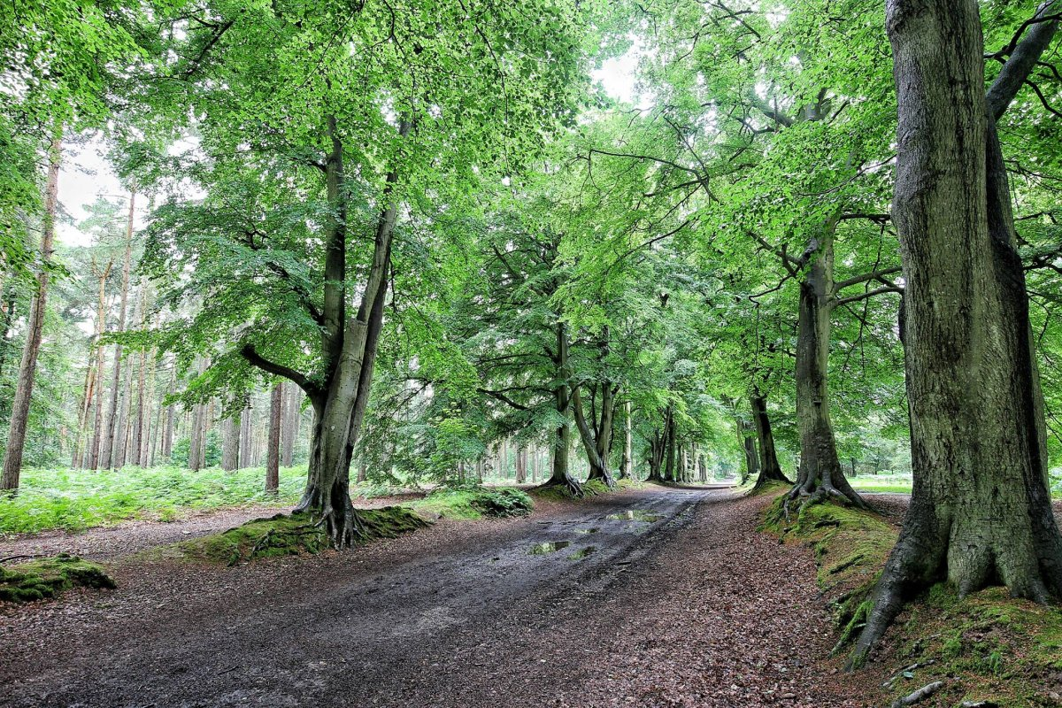 Harlestone Firs-April 2014
