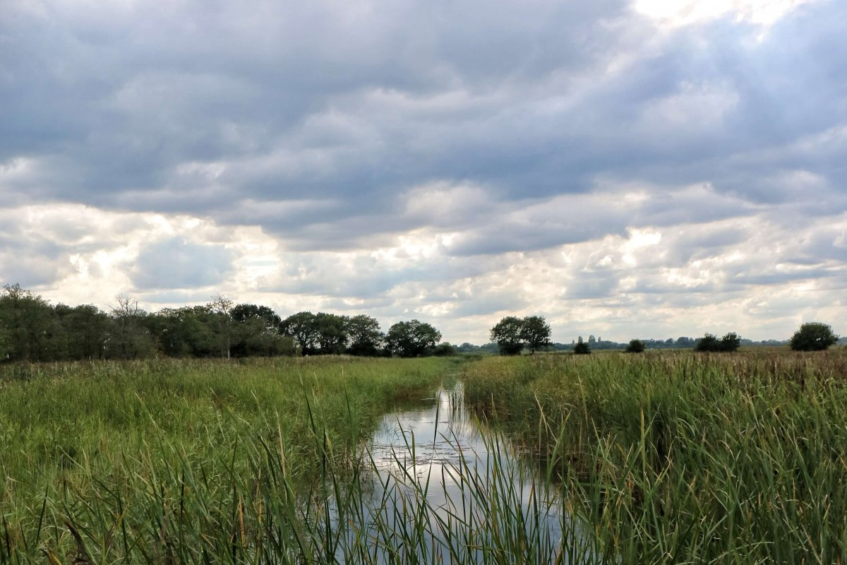 Hickling Broad – Norfolk Wildlife Trust