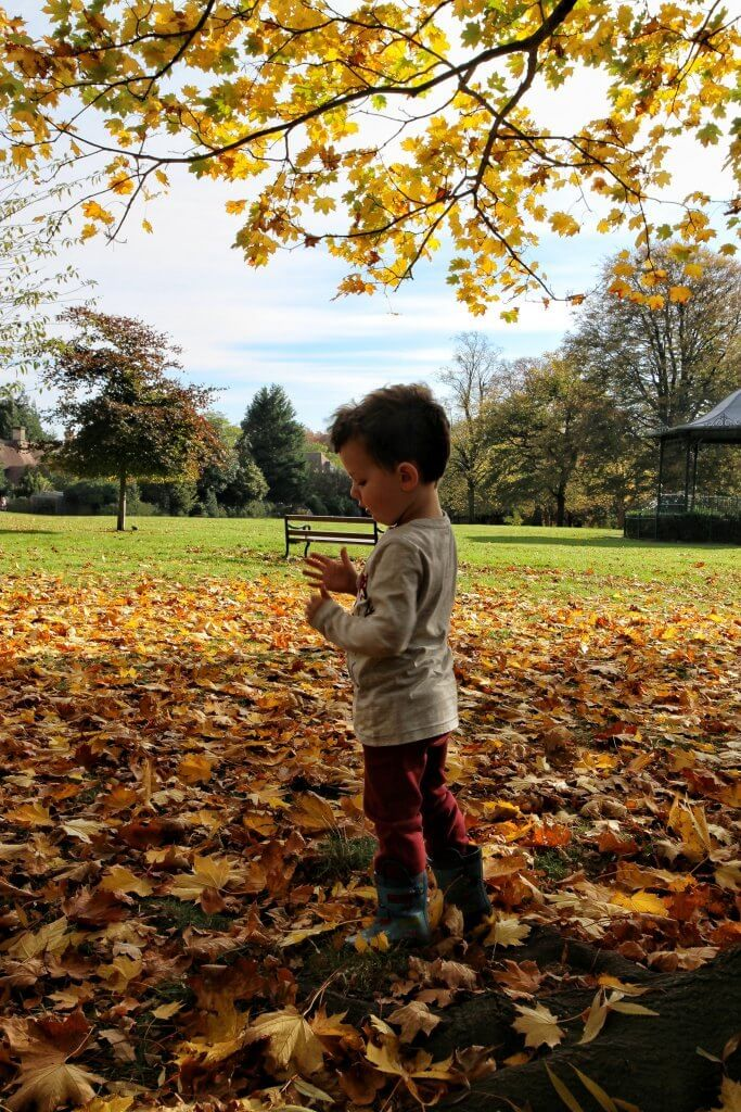 a small boy stands in a park amongst autumn leave