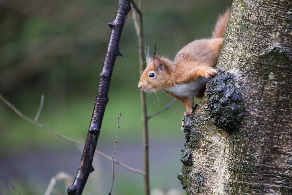 Top 5 Places to see British Wildlife